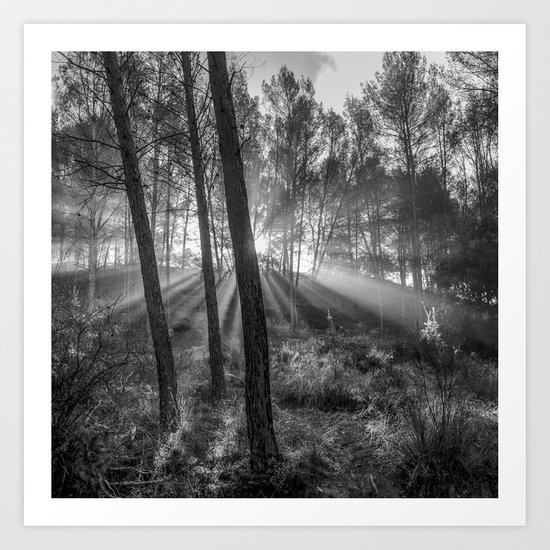 """Sunrise through the foggy forest"". Forest dreams. Mono Art Print"