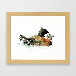 Ruddy Duck, duck artwork duck wall art design brown black Framed Art Print