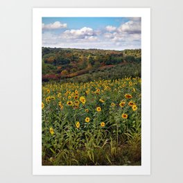 Sunflowers in the Fall Art Print