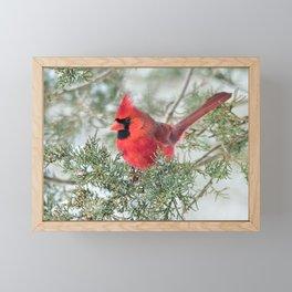 Cocky Cardinal Framed Mini Art Print