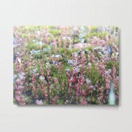 Soft Moss Metal Print