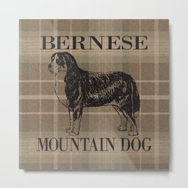 Bernese Mountain Dog on Plaid Metal Print