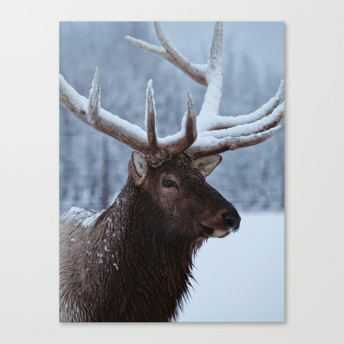Antlers In Snow Canvas Print