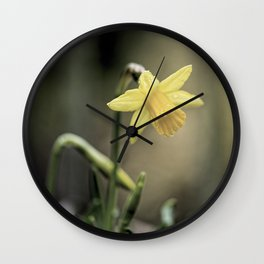 Daffodil IV Wall Clock