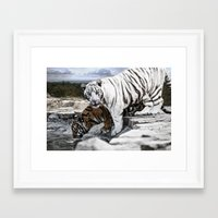 tigers Framed Art Prints featuring Tigers by Pawel Denkowicz