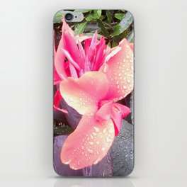 Pink Canna Lily and Raindrops iPhone Skin