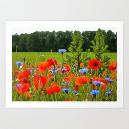 Poppies And Cornflowers Art Print