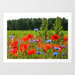 Poppies And Cornflowers Art Print