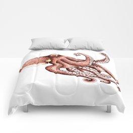 Octopus (Octopus vulgaris) Comforters