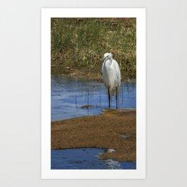 Snowy Egret of Chincoteague No. 3 Art Print