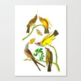 Vintage Scientific Bird Butterfly & Floral Illustration Canvas Print