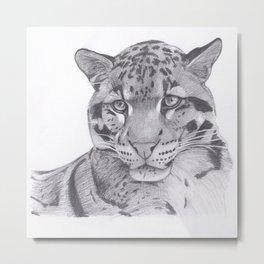 Clouded Leopard - Big Cat Metal Print
