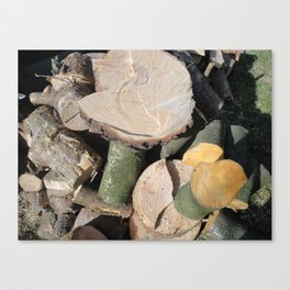 Cut Logs Canvas Print