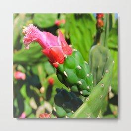 Cactus Pear Metal Print