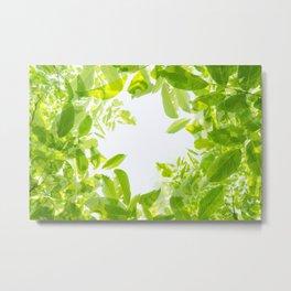 Walnut tree leaves pattern Metal Print