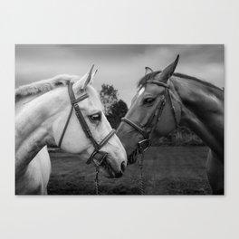 Horses of Instagram II Canvas Print