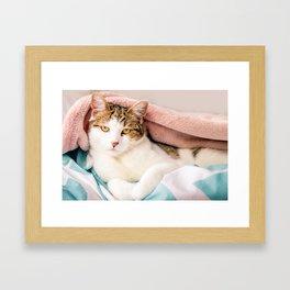 Hail King Cat! Framed Art Print