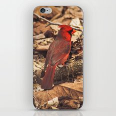 Bird of Ohio iPhone Skin