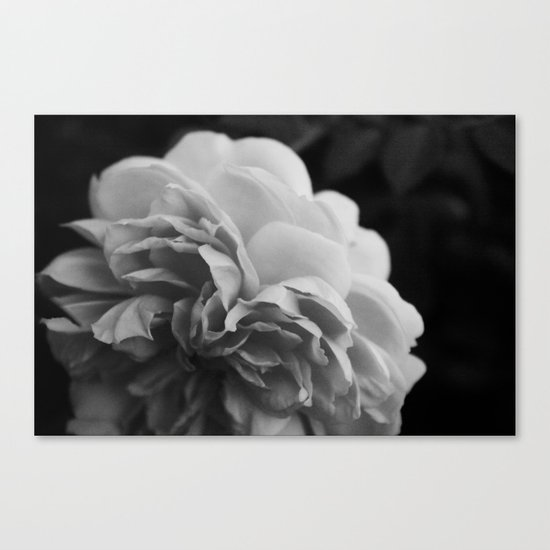 Wildeve Rose No. 2 - Black & White Canvas Print