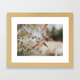 Hummingbird Love Framed Art Print