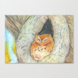 Cozy Owl Canvas Print