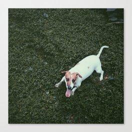Dog in Grass Canvas Print