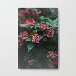Hydrangeas in the Garden Metal Print