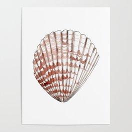 Seashell #2 Poster