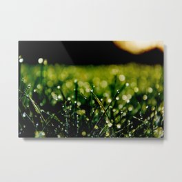 Dew Laden Grass 3 Metal Print