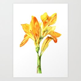 Golden Canna Yellow Flower Watercolor Painting Art Print