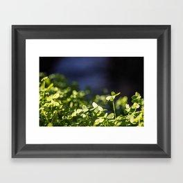 The Little Things in Life Framed Art Print