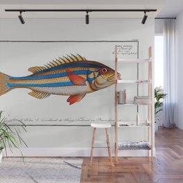 Marcus Elieser Bloch - Blue-striped Gilt-head Wall Mural