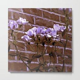 Brick Wall & Thorny Roses Metal Print