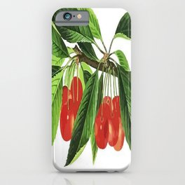 Red Cherries Vector on White Background iPhone Case