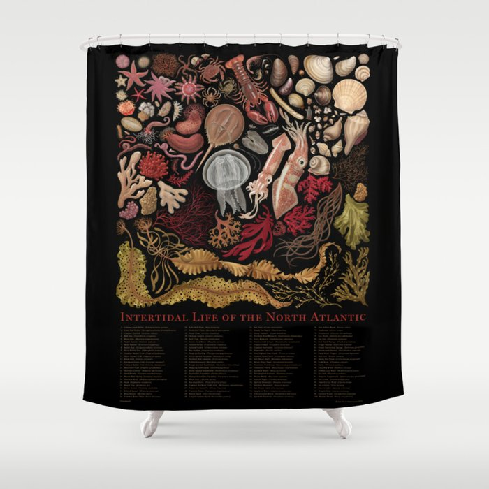 Intertidal Life of the North Atlantic (with species list) Shower Curtain