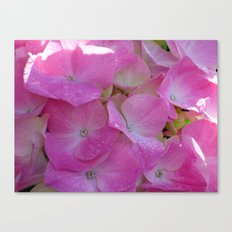 Raindrops on Hydrangeas Canvas Print