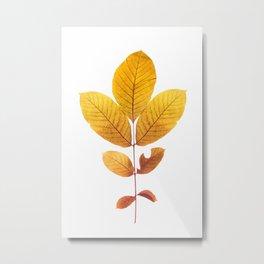 Dried walnut leaf Metal Print