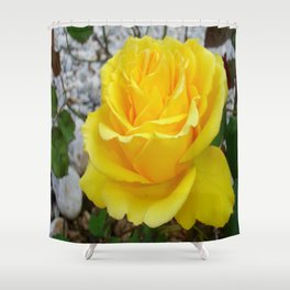 Beautiful Yellow Rose with Natural Garden Background Shower Curtain
