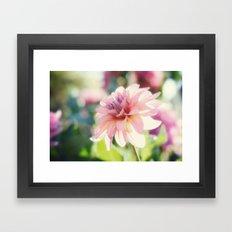 Dahlia 1 Framed Art Print