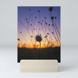 dry scabious Mini Art Print