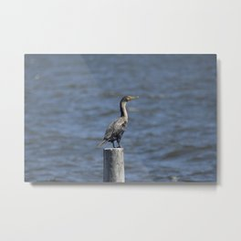 The Double Crested Cormorant Metal Print
