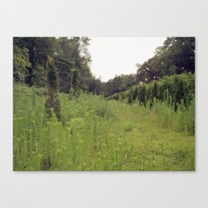 While I Was Out. Canvas Print