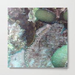 Watercolor Eel, Sharptail Eel 02, Bonaire, Dutch West Indies Metal Print