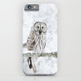 Portrait of a Great Grey Owl iPhone Case