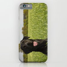 Black Labrador in a field Slim Case iPhone 6
