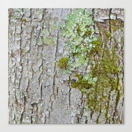 Mossy Bark Canvas Print