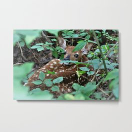 Spotted! Metal Print