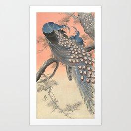Two peacocks on tree branch, Ohara Koson Art Print