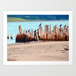Perched on Wharf Remains Art Print