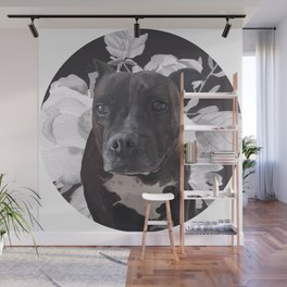Harlo the staffy Wall Mural